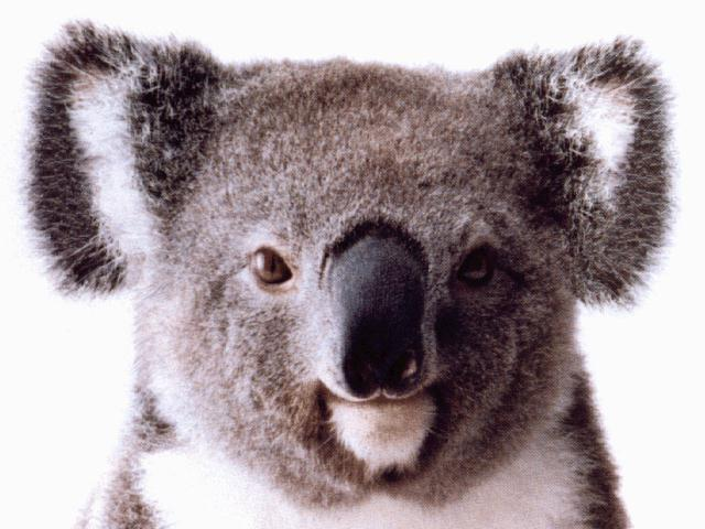 Local Search Rank Checker in Australia!